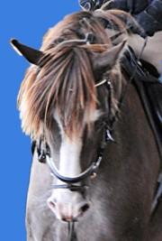 Christinenhof Caspar ist ein Sabino Schecke Dunkelfuchs. Cooles Foto von Pferd mit Reiter im Reitunterricht beim Christinenhof