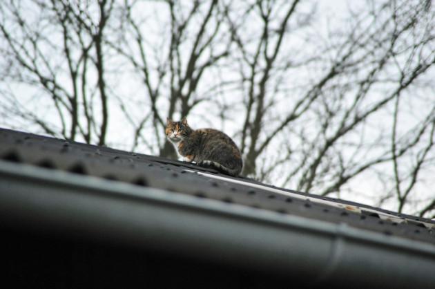 Katze auf dem Dach beim Christinenhof