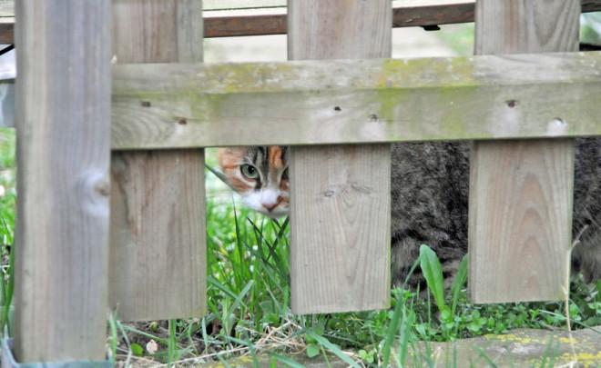 Katze hinterm Zaun auf dem Christinenhof