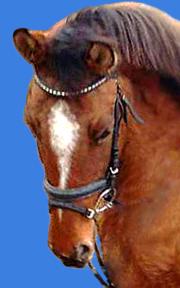 Isabell Ponystute Prinzessin Sarah auf dem Christinenhof ist ein tolles Kinderpony für den Reitunterricht in Oranienburg